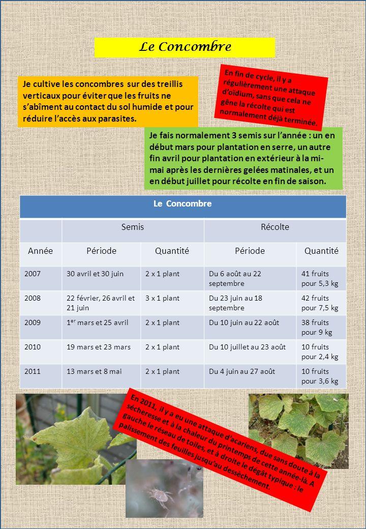 Le Concombre Je cultive les concombres sur des treillis verticaux pour éviter que les fruits ne sabîment au contact du sol humide et pour réduire laccès aux parasites.