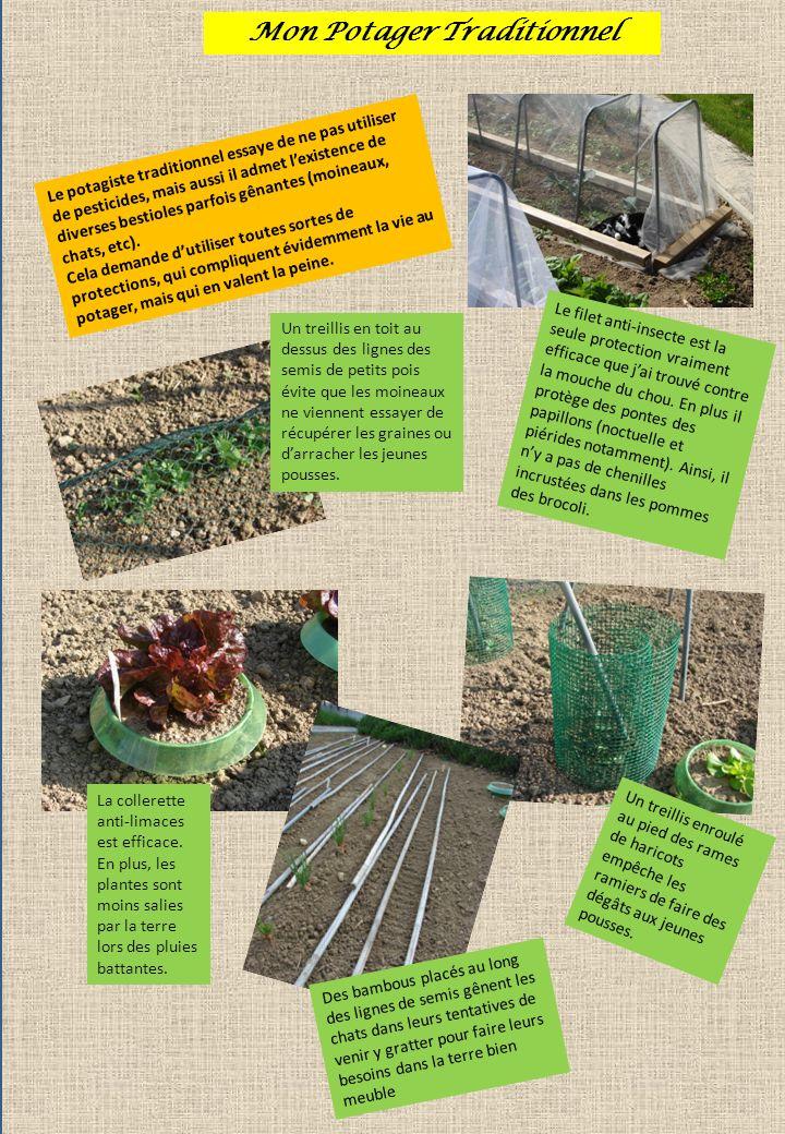 La Culture dans ma Serre Dans ma serre, je cultive le plus souvent : des haricots à rames et des concombres pour une récolte très hâtive, des tomates et des melons.