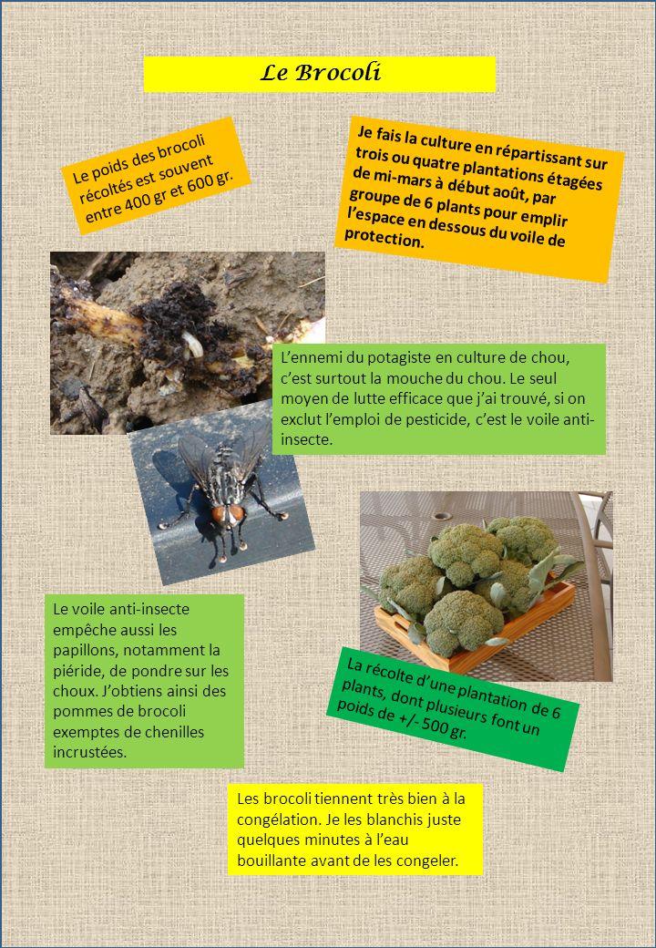 Le Fenouil Je cultive maintenant le fenouil par plantation sur la place des petits pois après arrachage de ces derniers.