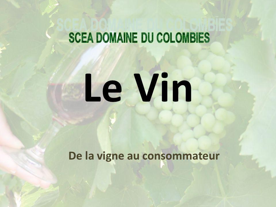 Le Vin De la vigne au consommateur