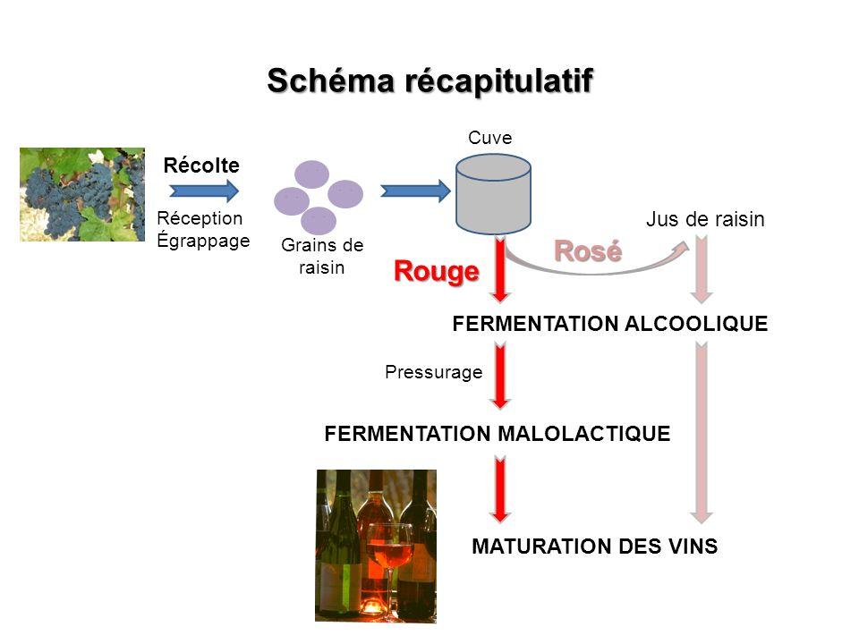 Schéma récapitulatif Réception Égrappage Récolte Grains de raisin Cuve Jus de raisin Rosé Rouge FERMENTATION ALCOOLIQUE Pressurage FERMENTATION MALOLACTIQUE MATURATION DES VINS