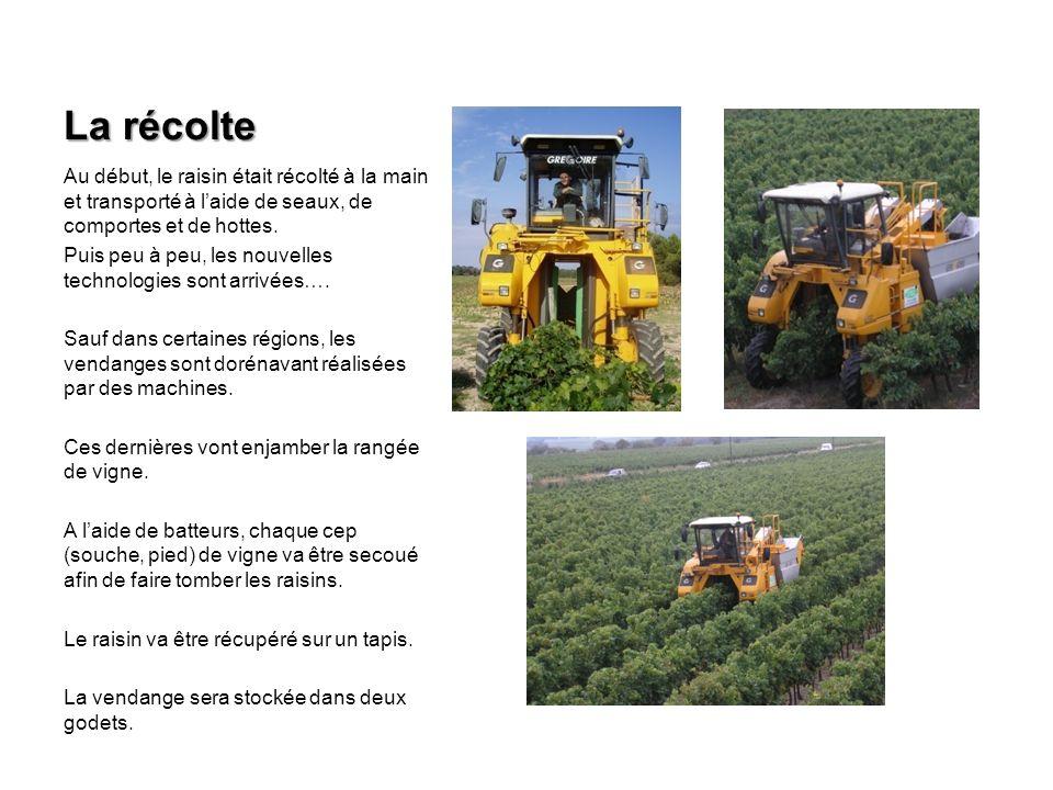 La récolte Au début, le raisin était récolté à la main et transporté à laide de seaux, de comportes et de hottes.