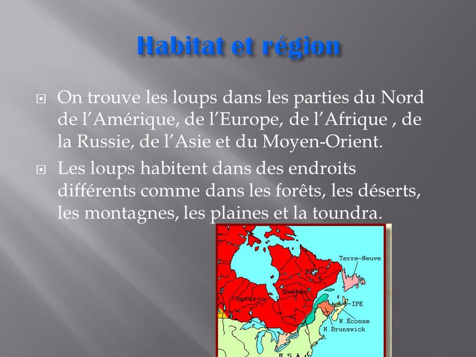 On trouve les loups dans les parties du Nord de lAmérique, de lEurope, de lAfrique, de la Russie, de lAsie et du Moyen-Orient. Les loups habitent dans