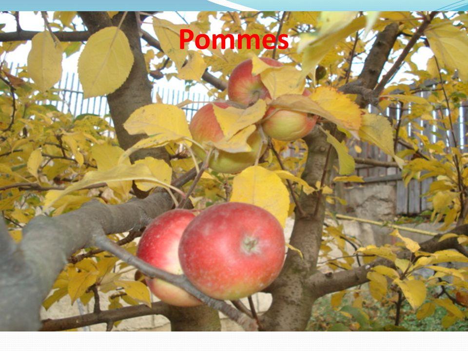 Fruit a évolué au fil du temps.