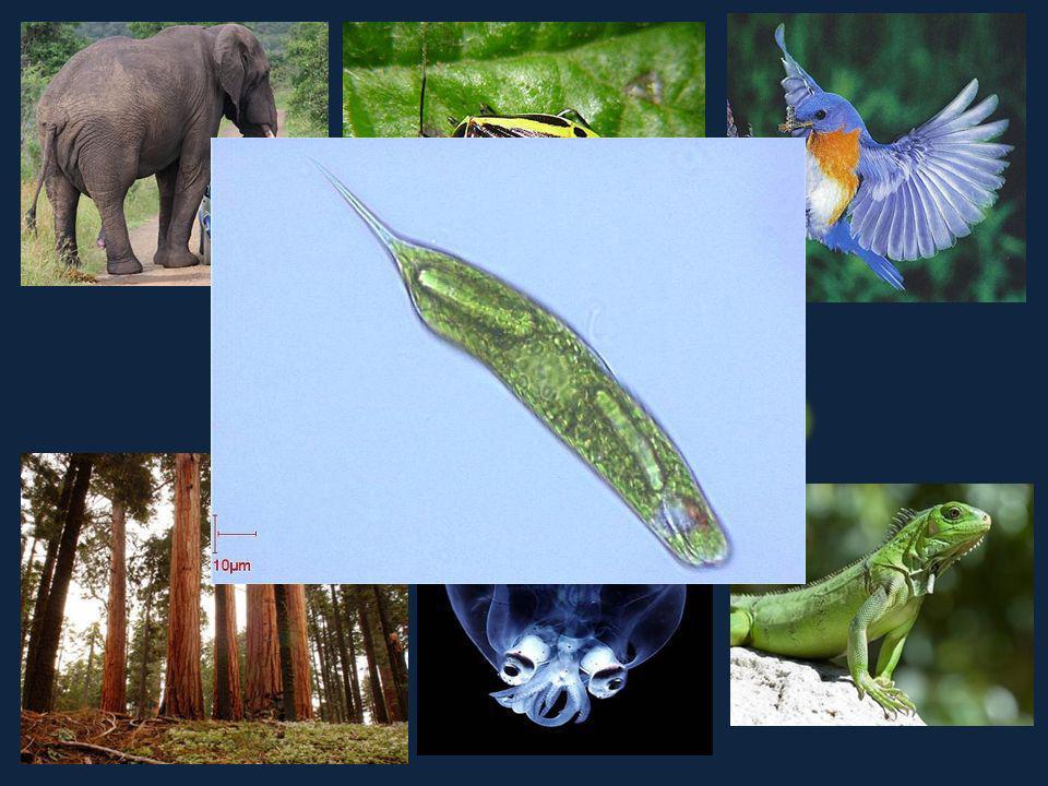 Les êtres vivants organismes Appelés organismes Tous les organismes doivent représenter TOUTES les caractéristiques des êtres vivants.
