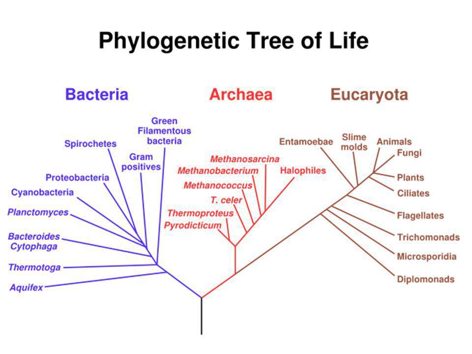 La théorie cellulaire Tous les êtres vivants sont composés de cellules et Toutes les cellules viennent de cellules préexistantes