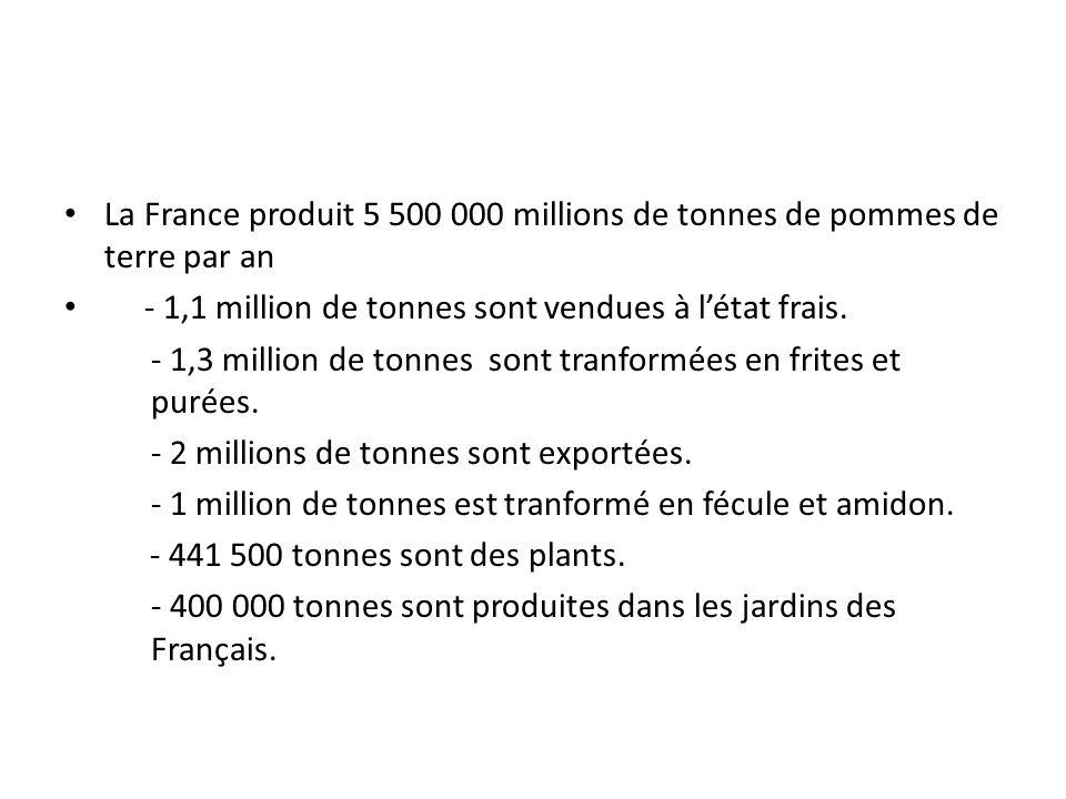 La France produit 5 500 000 millions de tonnes de pommes de terre par an - 1,1 million de tonnes sont vendues à létat frais. - 1,3 million de tonnes s