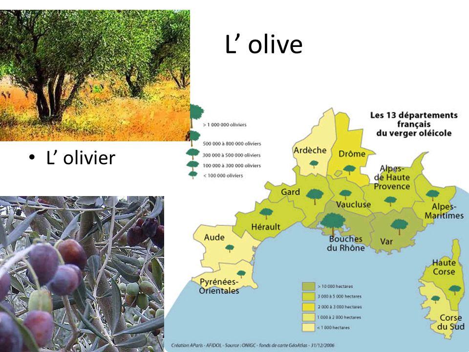 L olive L olivier