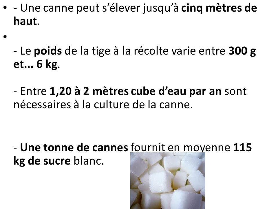 - Une canne peut sélever jusquà cinq mètres de haut. - Le poids de la tige à la récolte varie entre 300 g et... 6 kg. - Entre 1,20 à 2 mètres cube dea