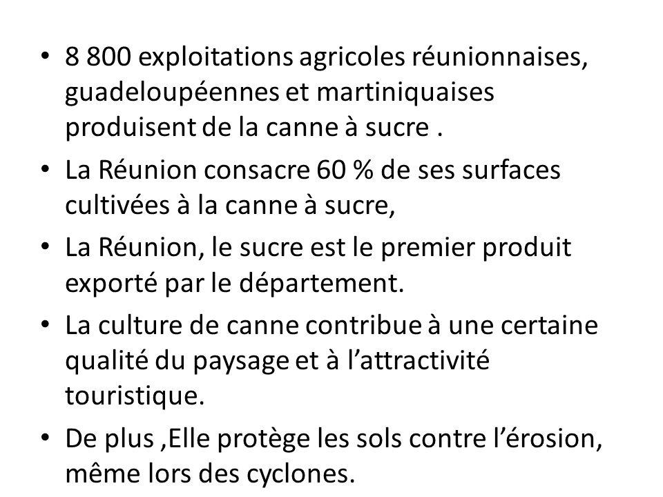 8 800 exploitations agricoles réunionnaises, guadeloupéennes et martiniquaises produisent de la canne à sucre. La Réunion consacre 60 % de ses surface