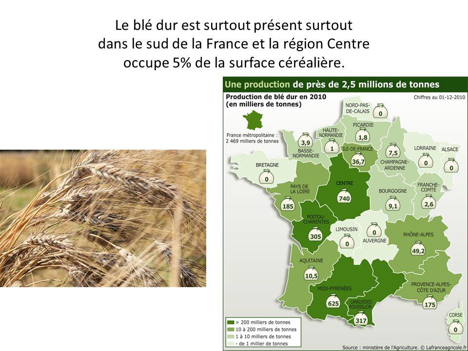 Le blé dur est surtout présent surtout dans le sud de la France et la région Centre occupe 5% de la surface céréalière.