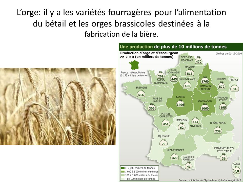 D autres céréales sont cultivées : - le triticale, né d un croisement entre le seigle et le blé (2,1 Mt), - l avoine (452 000 tonnes), - le sorgho (300 000 tonnes), - le seigle (148 000 tonnes), - le riz en Camargue (123 900 tonnes), - l épeautre, - le millet, - le sarrasin.