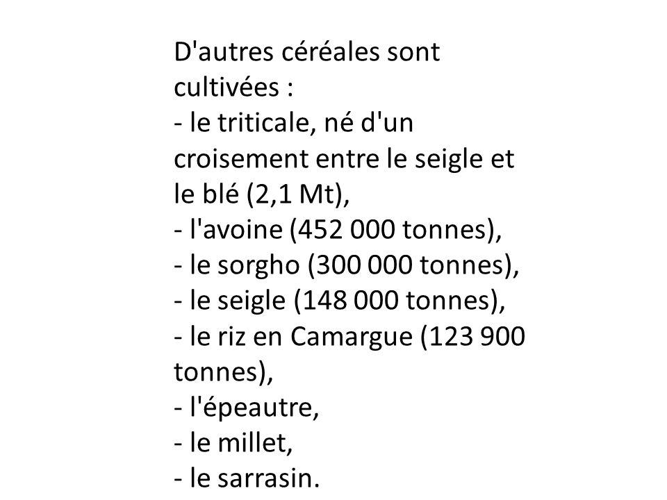 D'autres céréales sont cultivées : - le triticale, né d'un croisement entre le seigle et le blé (2,1 Mt), - l'avoine (452 000 tonnes), - le sorgho (30