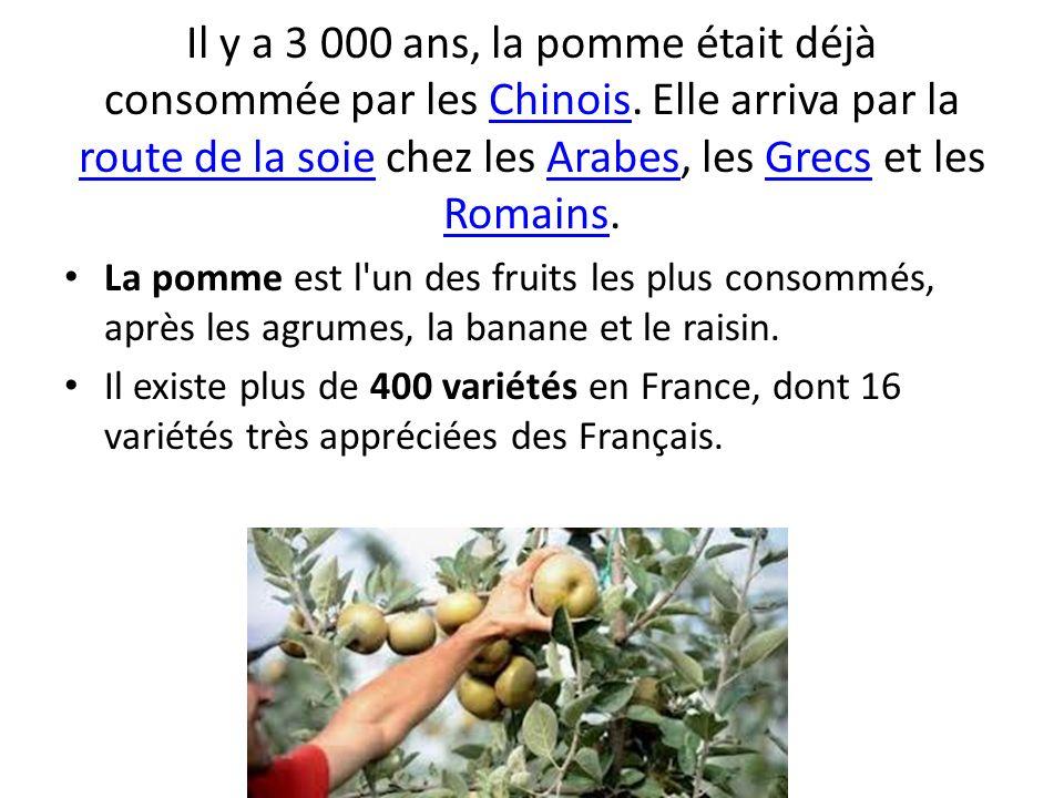 Il y a 3 000 ans, la pomme était déjà consommée par les Chinois. Elle arriva par la route de la soie chez les Arabes, les Grecs et les Romains.Chinois