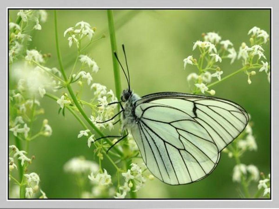 Javais peur du changement, Jusquà ce que… Jai vu que même le plus beau des papillons devait passer par une métamorphose.