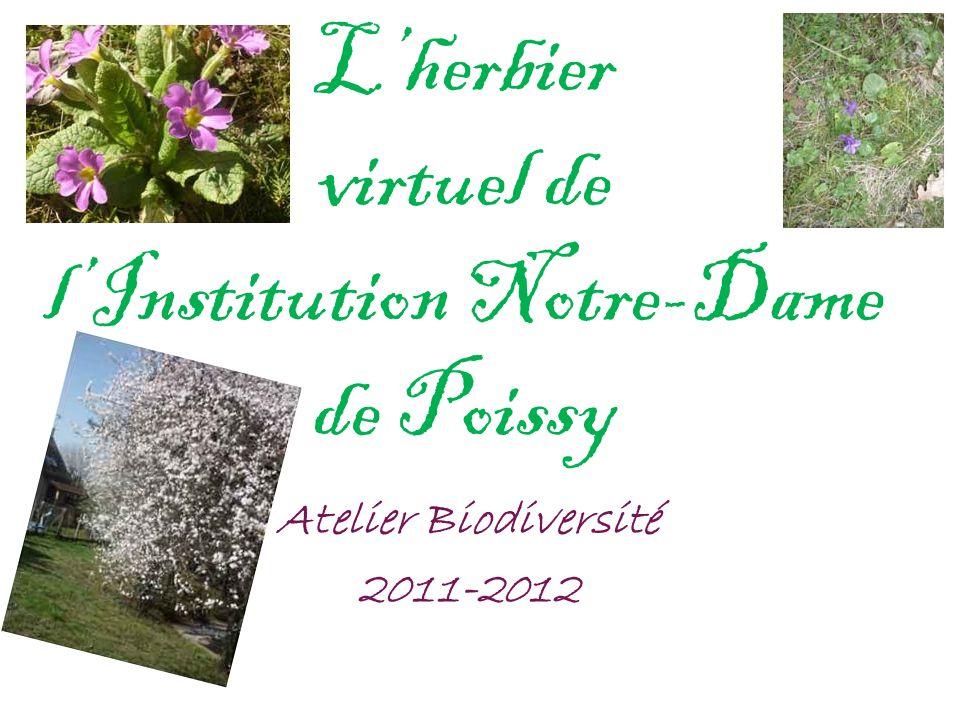 Lherbier virtuel de lInstitution Notre-Dame de Poissy Atelier Biodiversité 2011-2012