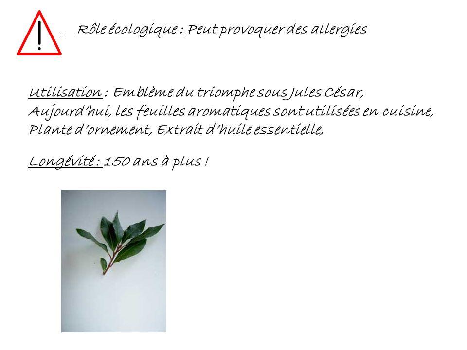 Rôle écologique : Peut provoquer des allergies Utilisation : Emblème du triomphe sous Jules César, Aujourdhui, les feuilles aromatiques sont utilisées