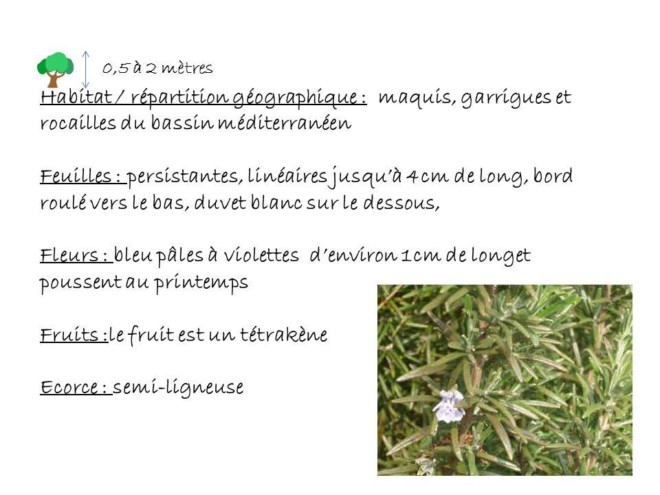 : Habitat / répartition géographique : maquis, garrigues et rocailles du bassin méditerranéen Feuilles : persistantes, linéaires jusquà 4cm de long, b