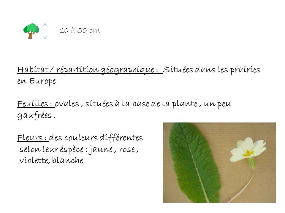 Habitat / répartition géographique : Situées dans les prairies en Europe Feuilles : ovales, situées à la base de la plante, un peu gaufrées. Fleurs :