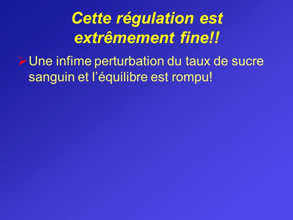 Cette régulation est extrêmement fine!! Une infime perturbation du taux de sucre sanguin et léquilibre est rompu!