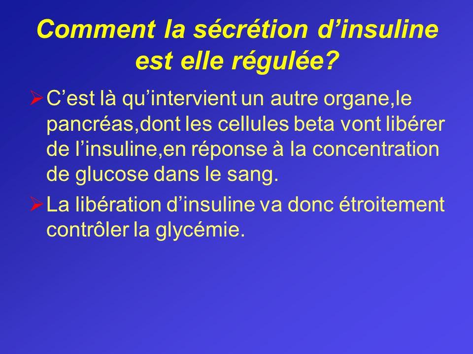 Comment la sécrétion dinsuline est elle régulée? Cest là quintervient un autre organe,le pancréas,dont les cellules beta vont libérer de linsuline,en