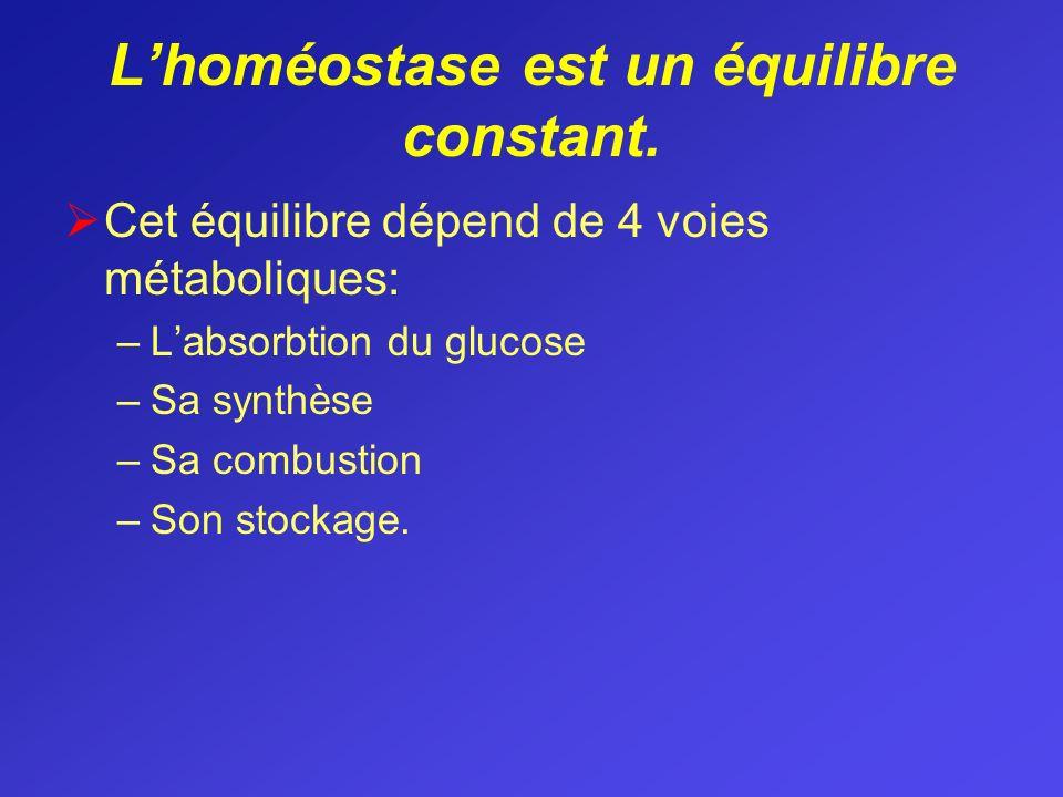 Lhoméostase est un équilibre constant. Cet équilibre dépend de 4 voies métaboliques: –Labsorbtion du glucose –Sa synthèse –Sa combustion –Son stockage