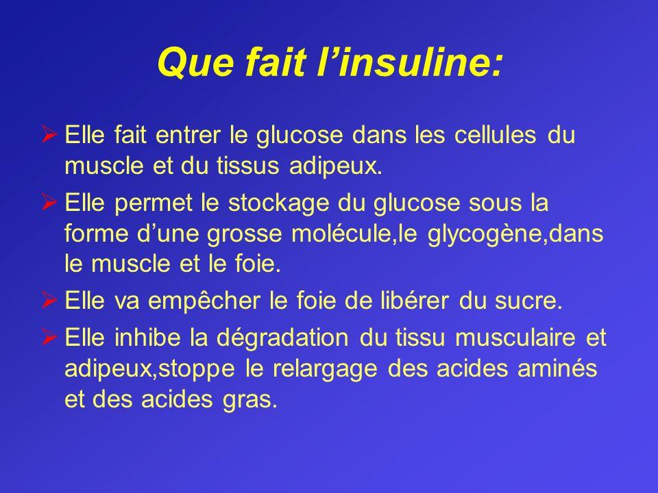 Que fait linsuline: Elle fait entrer le glucose dans les cellules du muscle et du tissus adipeux. Elle permet le stockage du glucose sous la forme dun