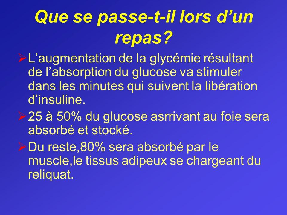 Que se passe-t-il lors dun repas? Laugmentation de la glycémie résultant de labsorption du glucose va stimuler dans les minutes qui suivent la libérat