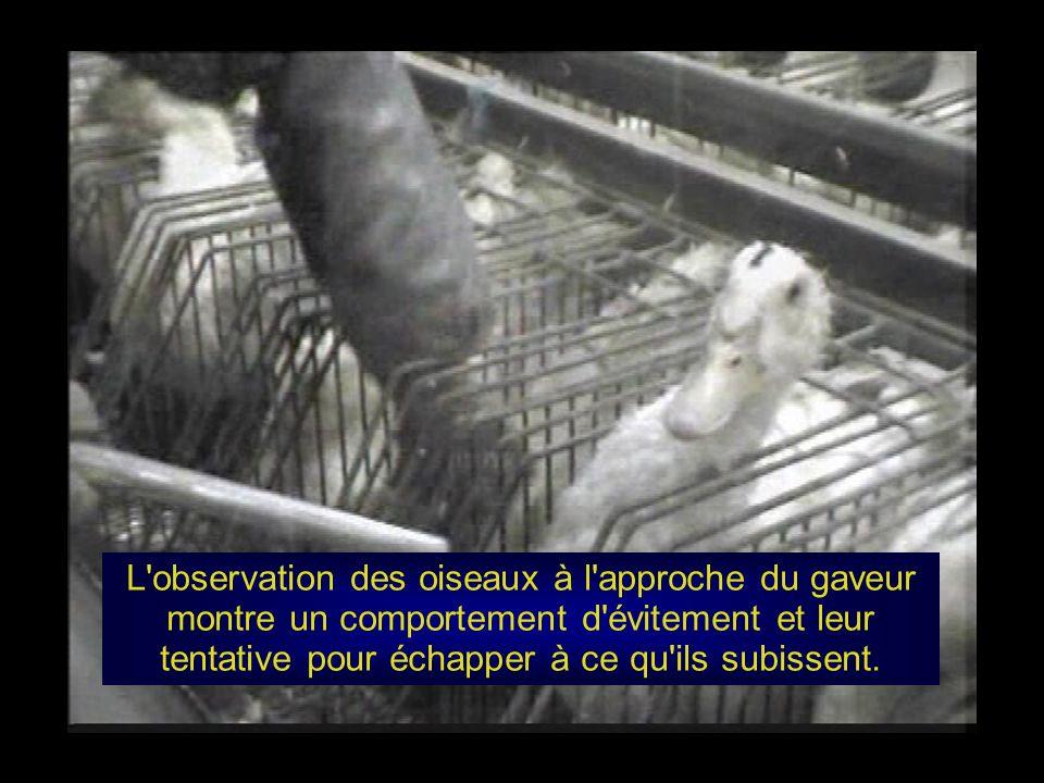Annexe 20 de la directive européenne du 20 juillet 1998 Méthodes d élevage 20.