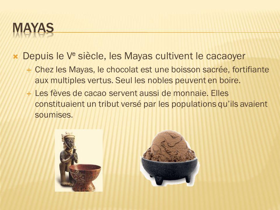 Depuis le V e siècle, les Mayas cultivent le cacaoyer Chez les Mayas, le chocolat est une boisson sacrée, fortifiante aux multiples vertus. Seul les n
