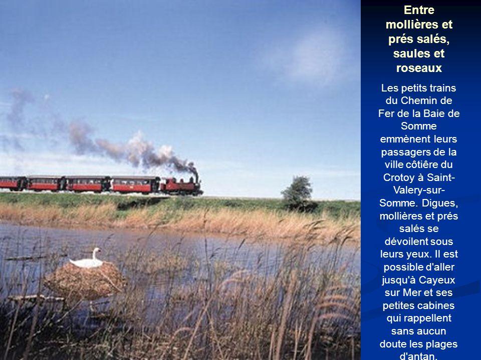 Entre mollières et prés salés, saules et roseaux Les petits trains du Chemin de Fer de la Baie de Somme emmènent leurs passagers de la ville côtiêre du Crotoy à Saint- Valery-sur- Somme.