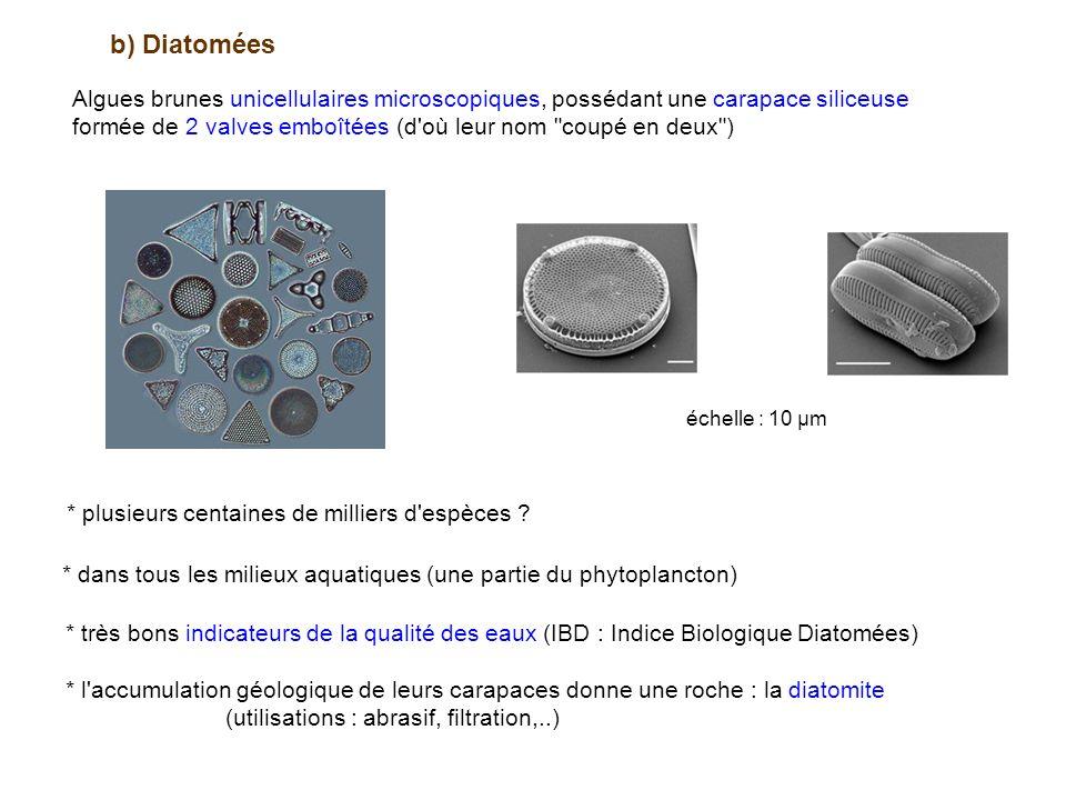 b) Diatomées Algues brunes unicellulaires microscopiques, possédant une carapace siliceuse formée de 2 valves emboîtées (d où leur nom coupé en deux ) échelle : 10 µm * plusieurs centaines de milliers d espèces .
