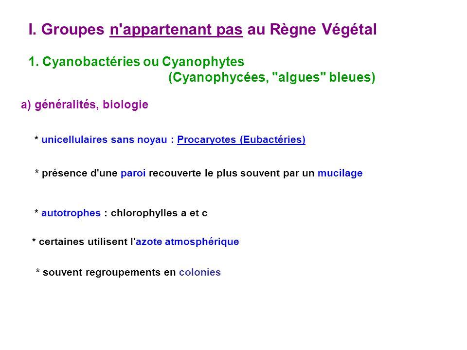 * pigments accessoires : + phycocyanine (bleu-vert) + phycoérythrine (rouge) + caroténoïdes (jaune, orangé, rouge) couleur variable * multiplication par scissiparité * très certainement les premiers êtres vivants chlorophylliens, apparus il y a plus de 3 Milliards d années : leur activité photosynthétique aurait donné les stromatolit(h)es.