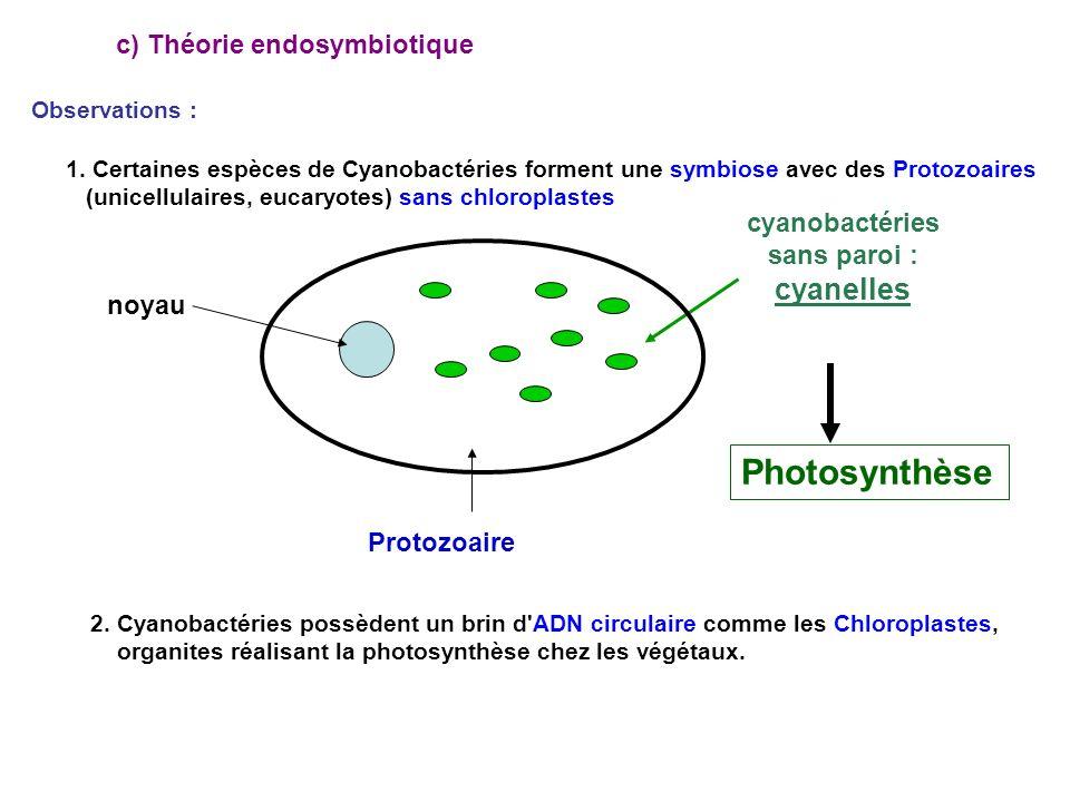 c) Théorie endosymbiotique 1.