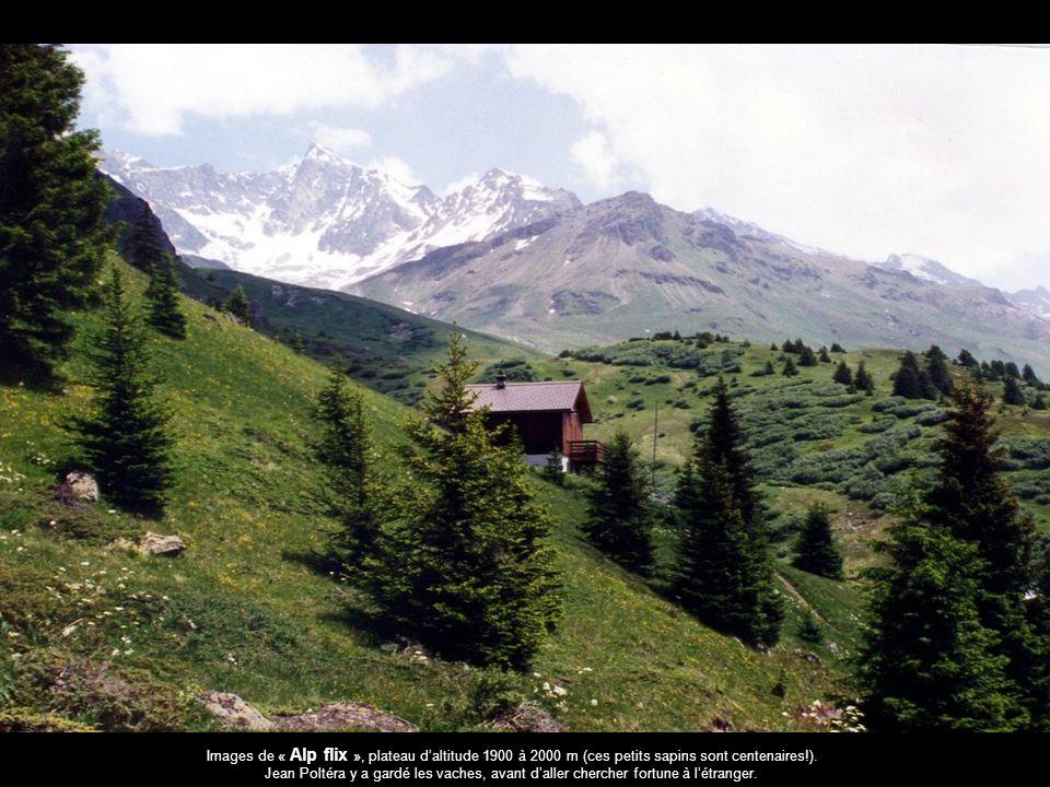Images de « Alp flix », plateau daltitude 1900 à 2000 m (ces petits sapins sont centenaires!). Jean Poltéra y a gardé les vaches, avant daller cherche