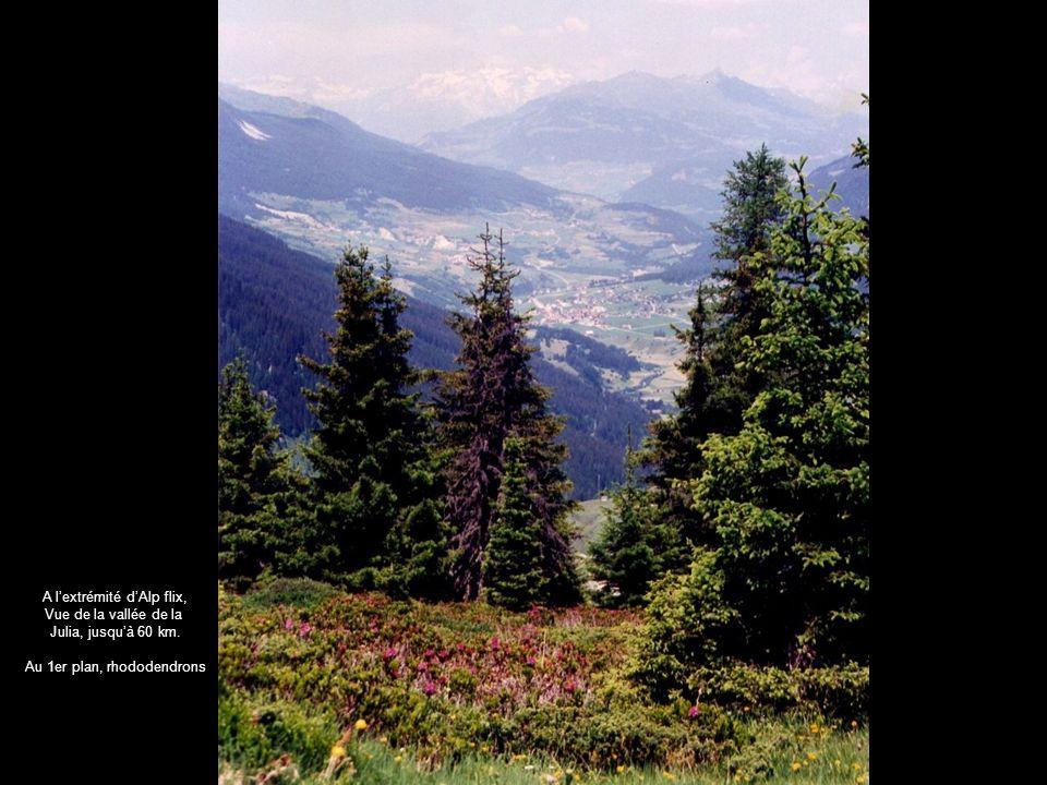 A lextrémité dAlp flix, Vue de la vallée de la Julia, jusquà 60 km. Au 1er plan, rhododendrons