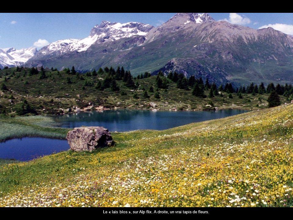 Le « laïs blos », sur Alp flix. A droite, un vrai tapis de fleurs.