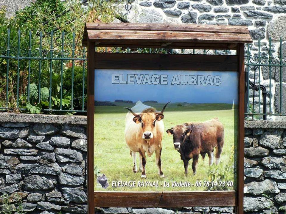 Laubrac Laubrac est une race bovine française originaire du plateau de l'Aubrac, au sud du Massif central. C'est une vache de taille moyenne, à la rob