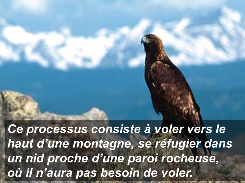 Ce processus consiste à voler vers le haut dune montagne, se réfugier dans un nid proche dune paroi rocheuse, où il naura pas besoin de voler.
