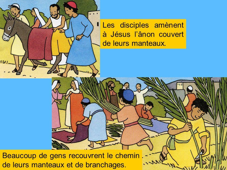 Les disciples amènent à Jésus lânon couvert de leurs manteaux. Beaucoup de gens recouvrent le chemin de leurs manteaux et de branchages.