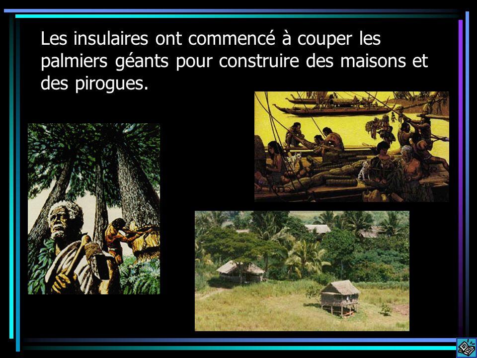 Les insulaires ont commencé à couper les palmiers géants pour construire des maisons et des pirogues.