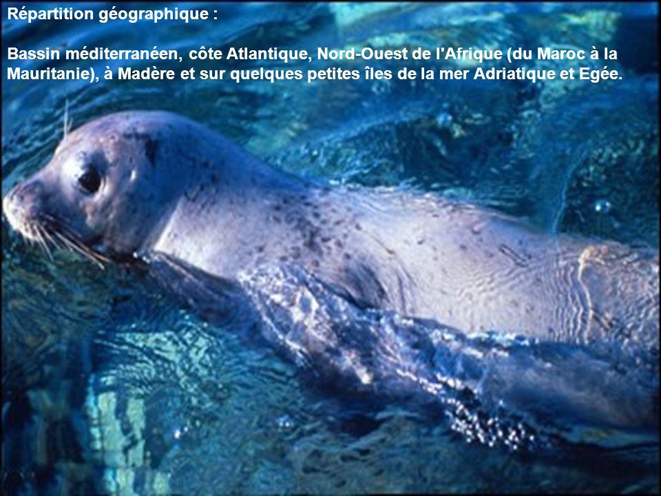 Répartition géographique : Bassin méditerranéen, côte Atlantique, Nord-Ouest de l'Afrique (du Maroc à la Mauritanie), à Madère et sur quelques petites