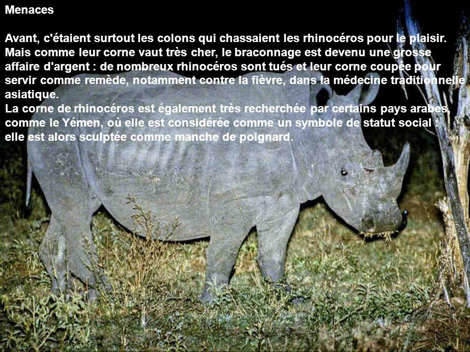 Menaces Avant, c'étaient surtout les colons qui chassaient les rhinocéros pour le plaisir. Mais comme leur corne vaut très cher, le braconnage est dev