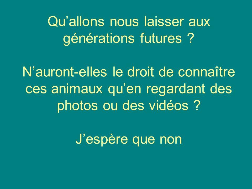 Quallons nous laisser aux générations futures ? Nauront-elles le droit de connaître ces animaux quen regardant des photos ou des vidéos ? Jespère que