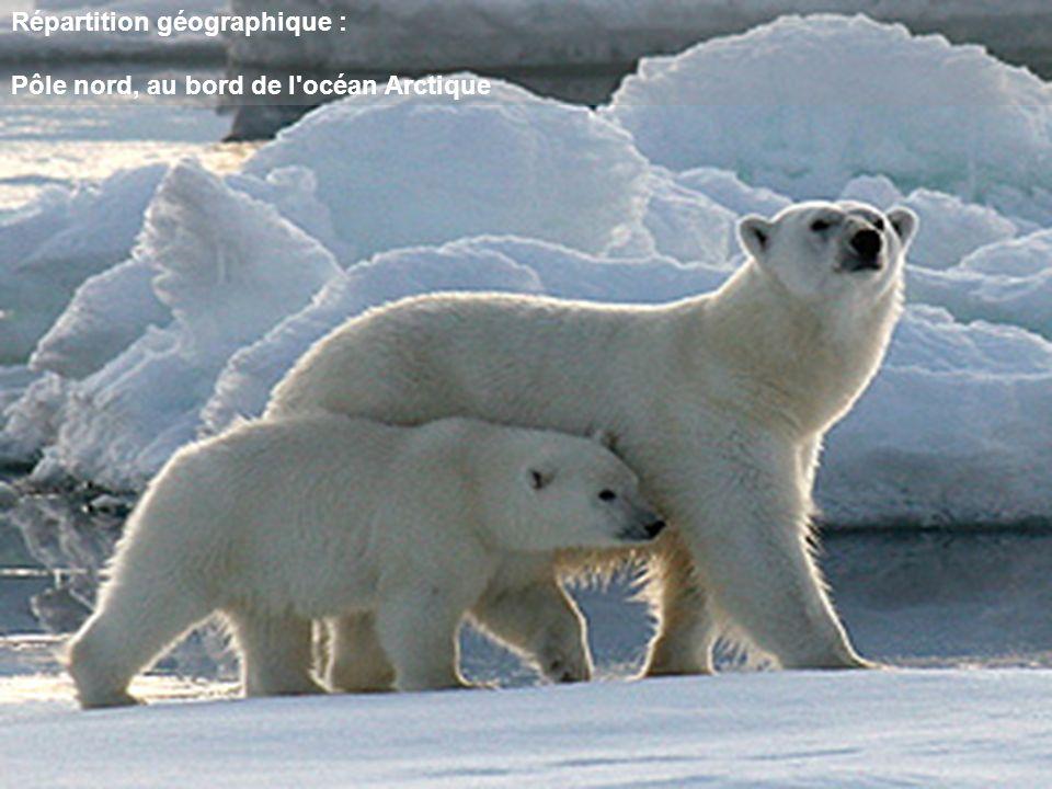 Répartition géographique : Pôle nord, au bord de l'océan Arctique