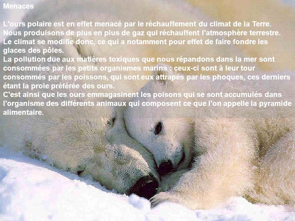Menaces L'ours polaire est en effet menacé par le réchauffement du climat de la Terre. Nous produisons de plus en plus de gaz qui réchauffent l'atmosp