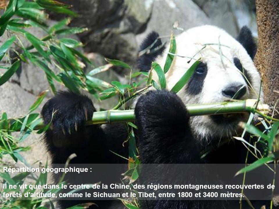 Répartition géographique : Il ne vit que dans le centre de la Chine, des régions montagneuses recouvertes de forêts d altitude, comme le Sichuan et le Tibet, entre 1800 et 3400 mètres.