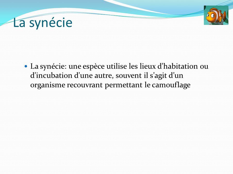 La synécie: une espèce utilise les lieux d'habitation ou d'incubation d'une autre, souvent il sagit dun organisme recouvrant permettant le camouflage