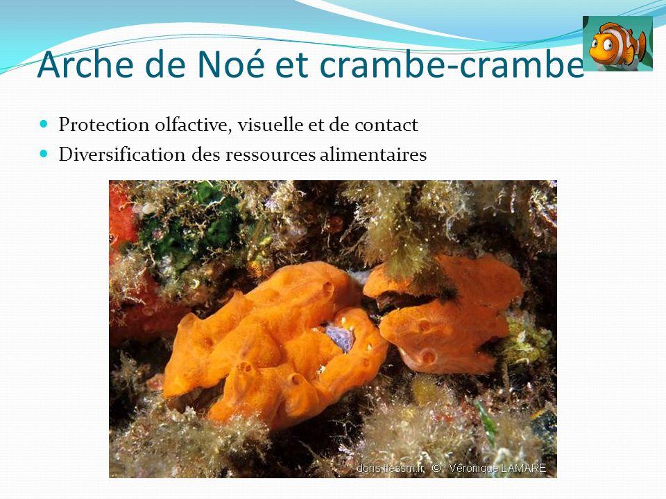 Protection olfactive, visuelle et de contact Diversification des ressources alimentaires Arche de Noé et crambe-crambe
