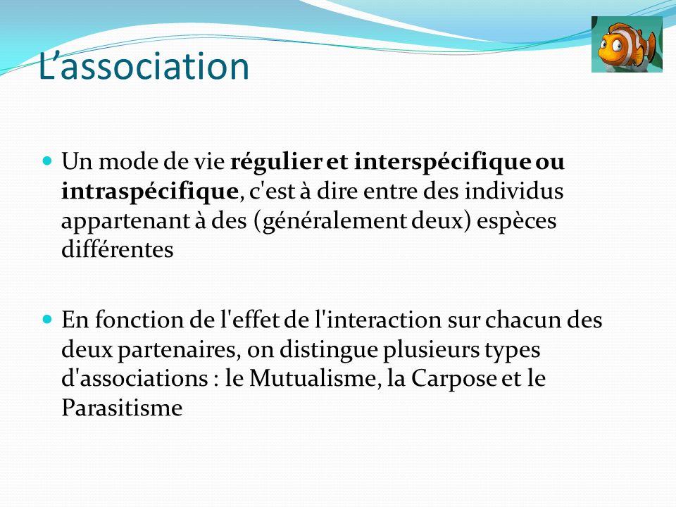 Lassociation Un mode de vie régulier et interspécifique ou intraspécifique, c'est à dire entre des individus appartenant à des (généralement deux) esp